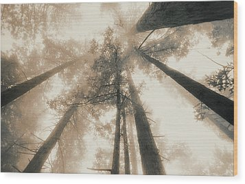 Redwood Forest, Northern California, Usa Wood Print by Mel Curtis