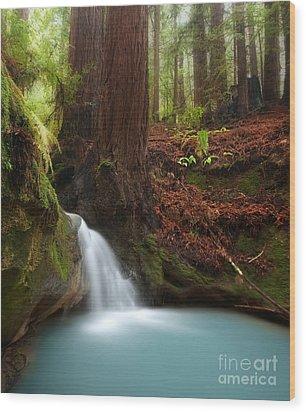 Redwood Forest Waterfall Wood Print by Matt Tilghman