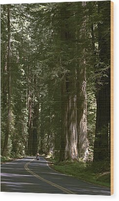Redwood Highway Wood Print by Wes and Dotty Weber