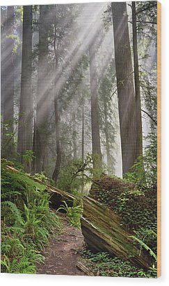 Redwood Light Wood Print