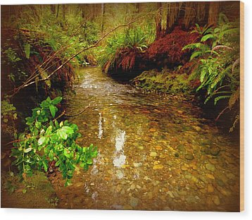 Redwood Stream Reflections Wood Print by Cindy Wright