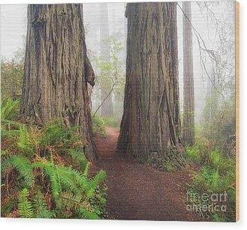 Redwood Trail Wood Print