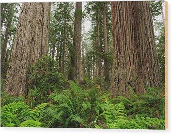 Redwoods Wood Print by Eric Foltz