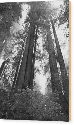 Redwoods In The Fog Wood Print by Loree Johnson