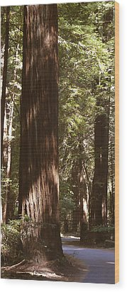 Redwoods Wood Print by Mike McGlothlen