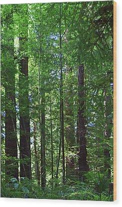 Redwoods No. 3-1 Wood Print