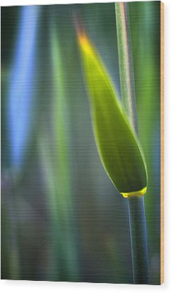Reed Wood Print by Silke Magino