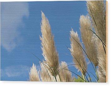 Reeds Against Sky Wood Print