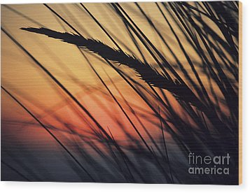 Reeds And Sunset Wood Print by Brent Black - Printscapes