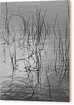 Reeds Wood Print by Art Shimamura