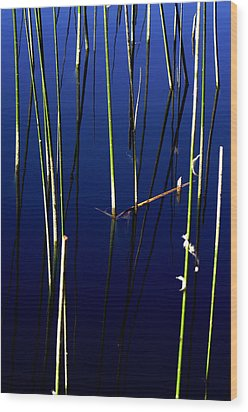 Reeds Of Reflection Wood Print by Chris Brannen