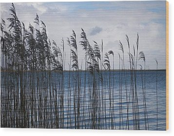Wood Print featuring the photograph Reeds by Votus