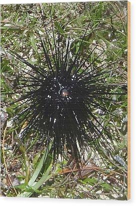 Reef Life - Sea Urchin 2 Wood Print