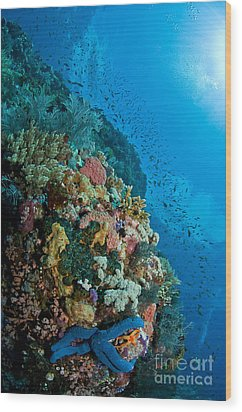 Reef Scene With Corals And Fish Wood Print by Mathieu Meur