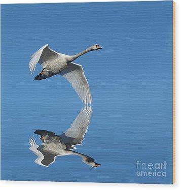 Reflected Swan Wood Print