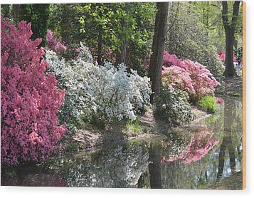 Reflecting Azaleas Wood Print by Linda Geiger