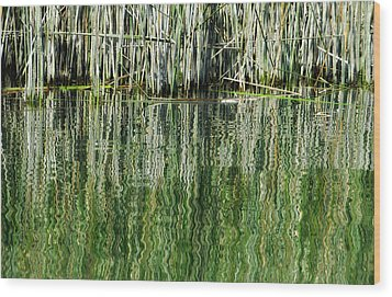 Reflecting Back Wood Print by Donna Blackhall