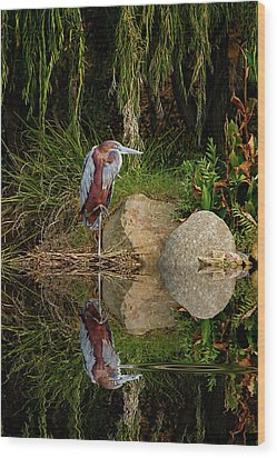 Reflecting On Lunch Wood Print by Jeffrey Jensen