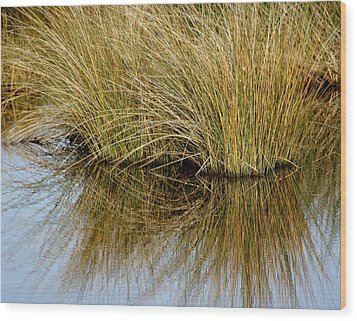 Reflecting Reeds Wood Print by Marty Koch