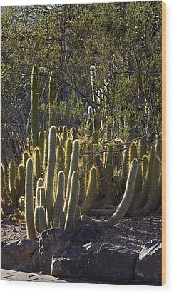 Wood Print featuring the photograph Reflecting The Sunshine by Phyllis Denton