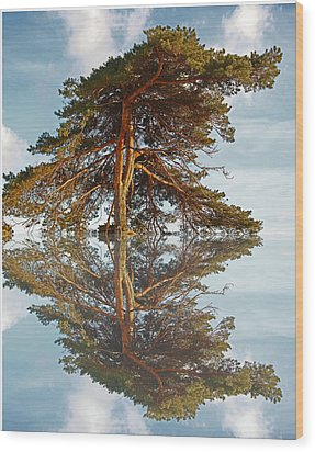 Reflection   Wood Print