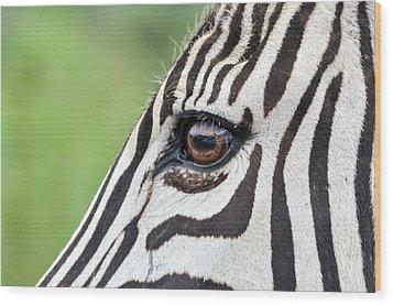Reflection In A Zebra Eye Wood Print