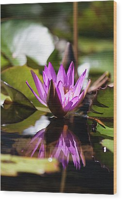 Wood Print featuring the photograph Reflection In Fuchsia by Suzanne Gaff