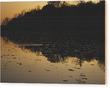 Reflection In The Water At Everglades Wood Print by Stacy Gold
