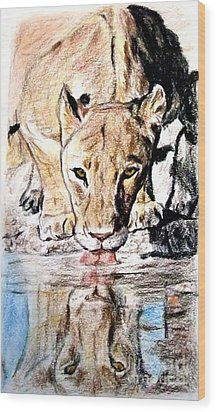 Wood Print featuring the drawing Reflection Of A Lioness Drinking From A Watering Hole by Jim Fitzpatrick