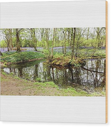 #reflection #water #bluebell Wood Print by Natalie Anne