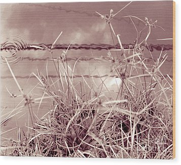 Wood Print featuring the photograph Reflections 1 by Mukta Gupta