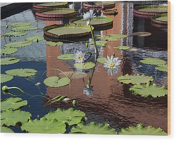 Reflections II Wood Print by Suzanne Gaff