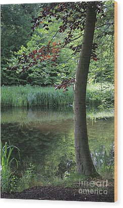 Reflections In The Water Wood Print