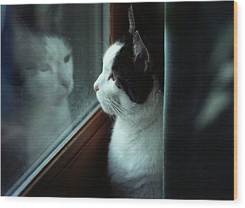 Wood Print featuring the photograph Reflections Of A Cat by Wanda Brandon