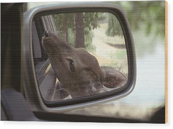 Wood Print featuring the photograph Reflections Of A Deer by Wanda Brandon