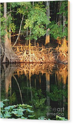 Reflections Of Our Roots Wood Print by Lora Wood
