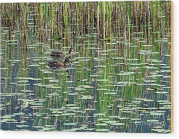 Reflections On Duck Pond Wood Print by Sharon Talson
