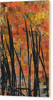 Reflections On Infinity Wood Print by Angela Davies