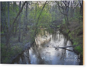 Wood Print featuring the photograph Reflections On The Congaree Creek by Skip Willits
