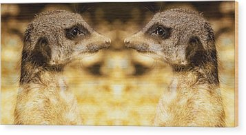 Wood Print featuring the photograph Reflective Meerkat by Chris Boulton