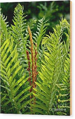 Refreshing Fern In The Woodland Garden Wood Print