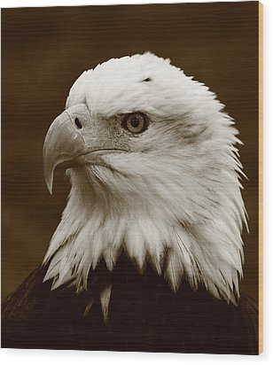 Regal  Eagle Wood Print