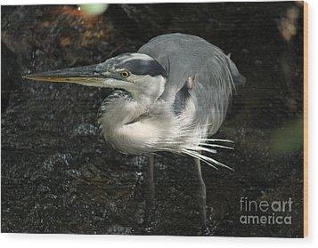 Regal Heron Wood Print by Theresa Willingham