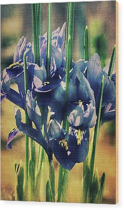 Wood Print featuring the photograph Regal Splendour  by Connie Handscomb