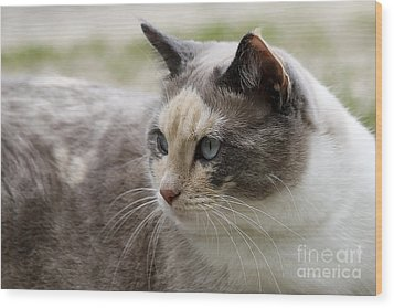 Wood Print featuring the photograph Relaxed by Teresa Zieba