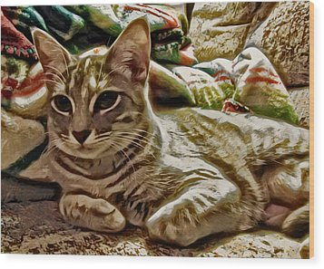 Relaxing Miyu Wood Print by David G Paul