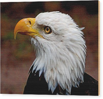 Reminiscent Bald Eagle Wood Print by Donna Proctor