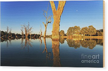 Wood Print featuring the photograph Renamrk Murray River South Australia by Bill Robinson