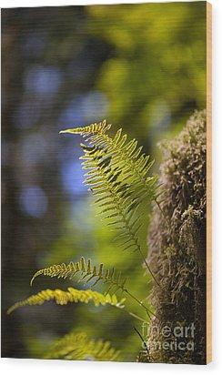 Renewal Ferns Wood Print by Mike Reid