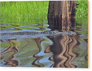 Wood Print featuring the photograph Reptile Ripples by Al Powell Photography USA